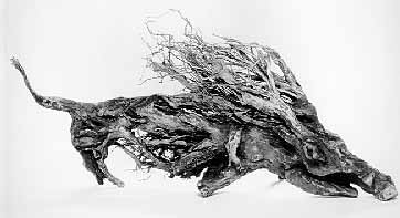"LS8812 Lucas SITHOLE ""You won't find me any more! (Warthog)"" 1988 Indigenous wood (root) 053x118x027 cm"
